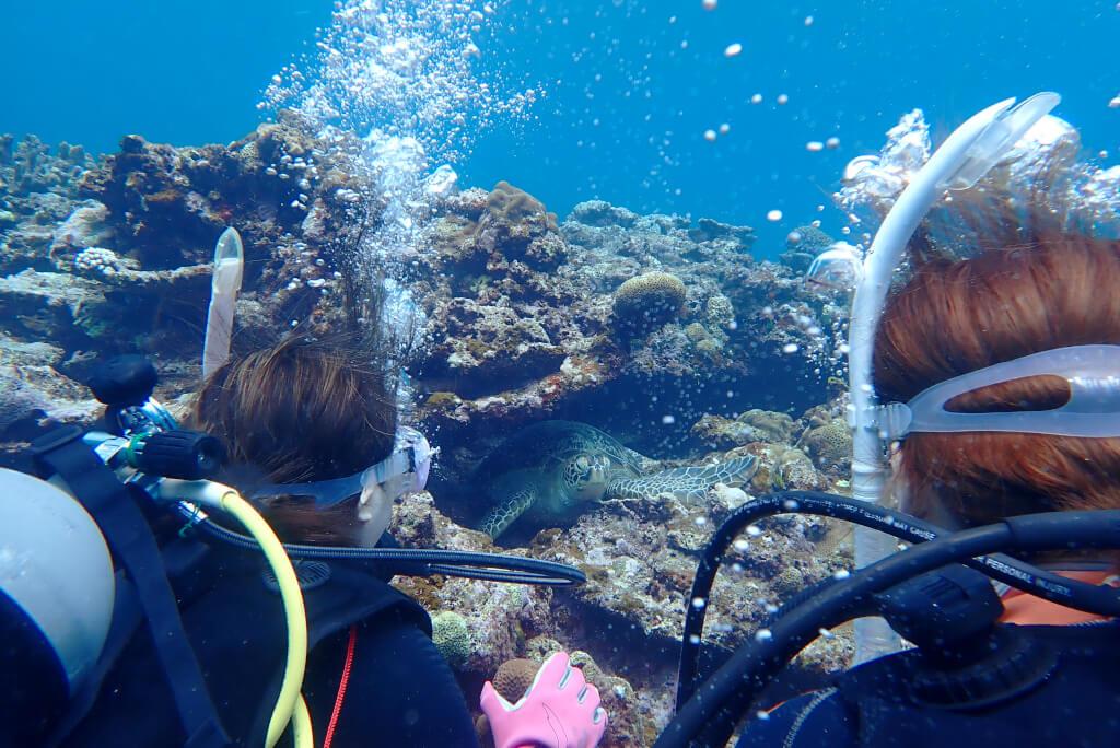 体験ダイバーとアオウミガメ