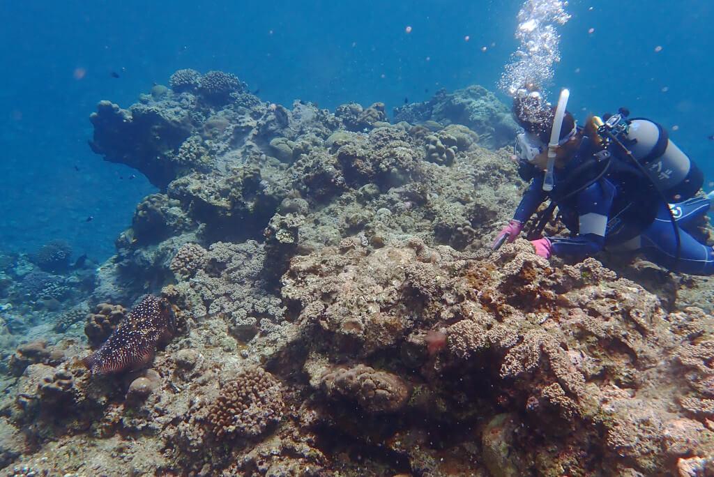 体験ダイビングでコブシメ