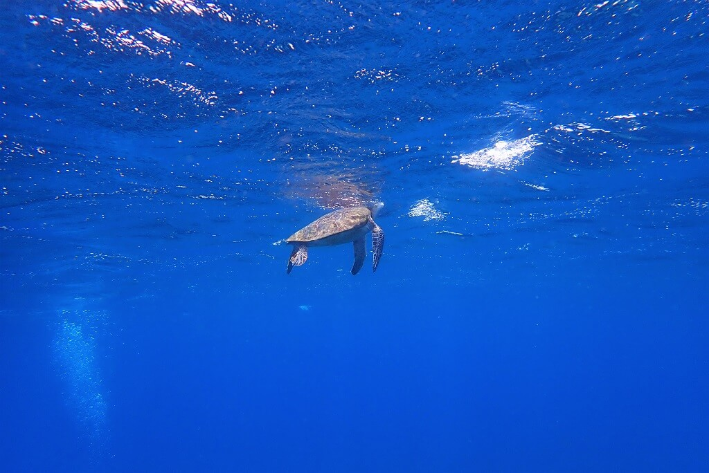 ウミガメの息継ぎ