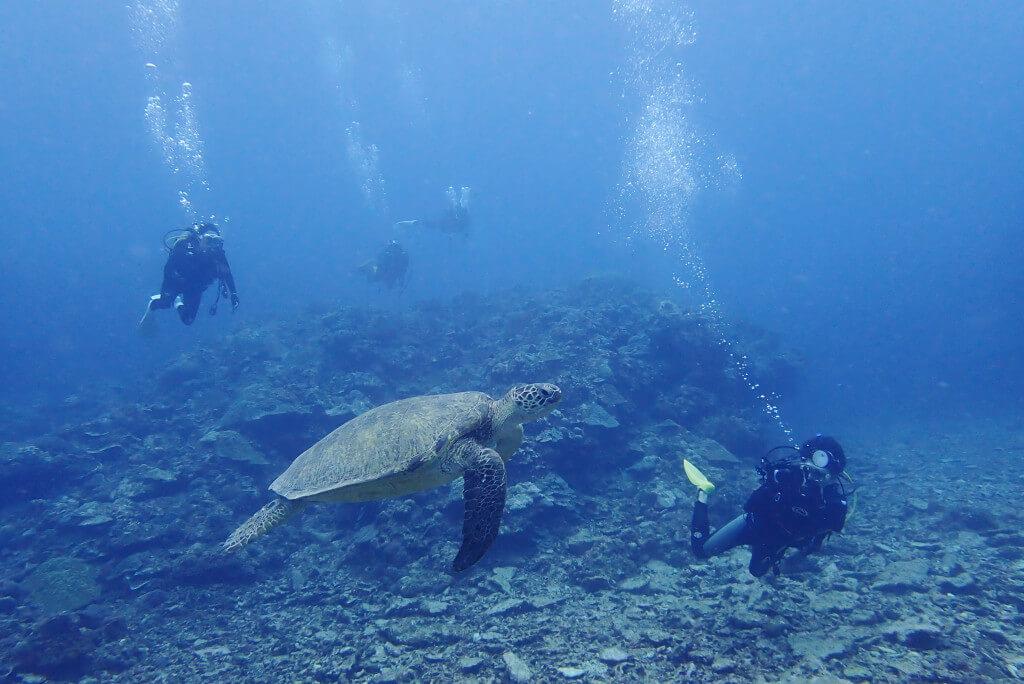 青い海とアオウミガメ