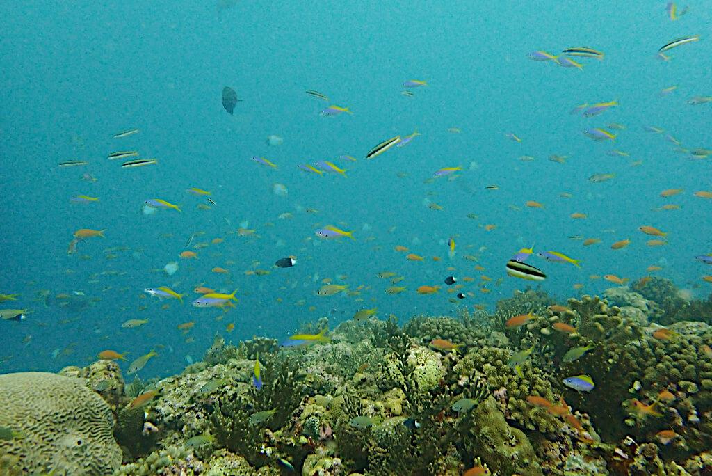 濁った海とお魚たち