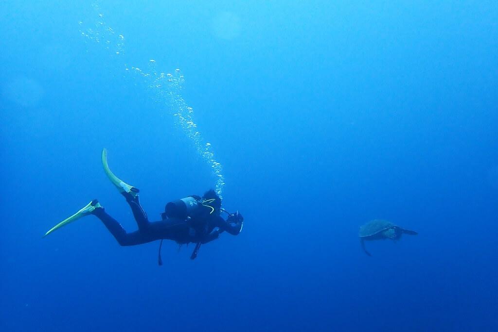 アオウミガメとゲストさん