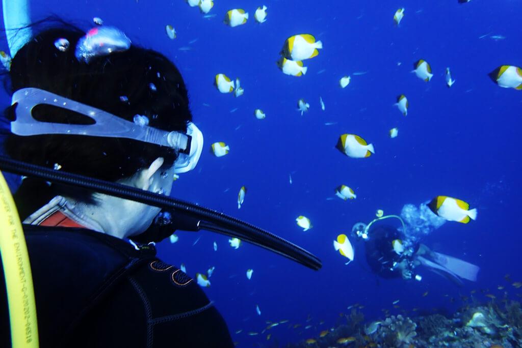 体験ダイバーの見る景色
